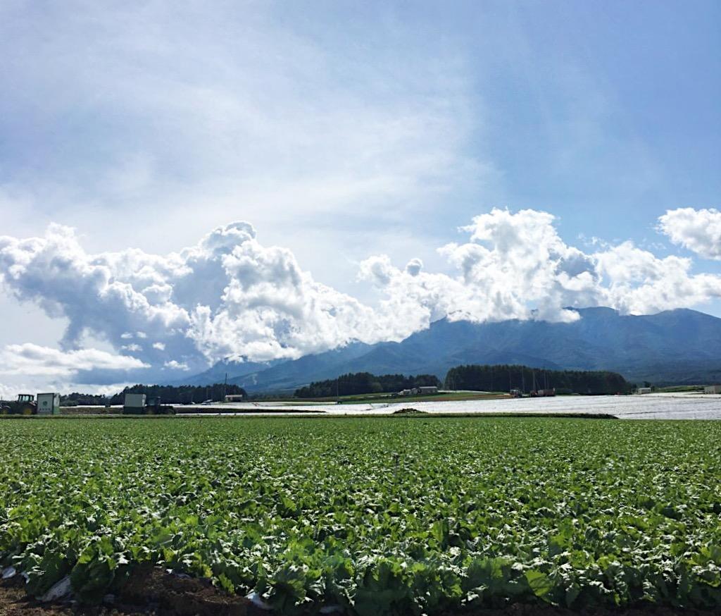 Kawakami Village Lettuce Farm