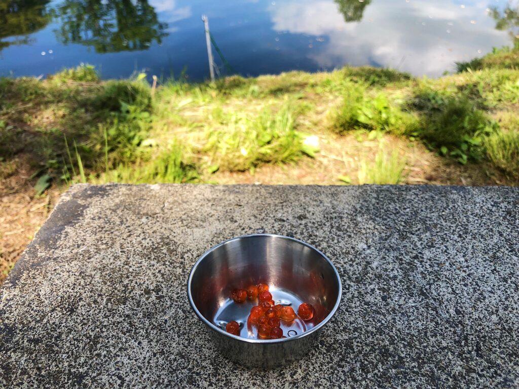 Salmon egg bait